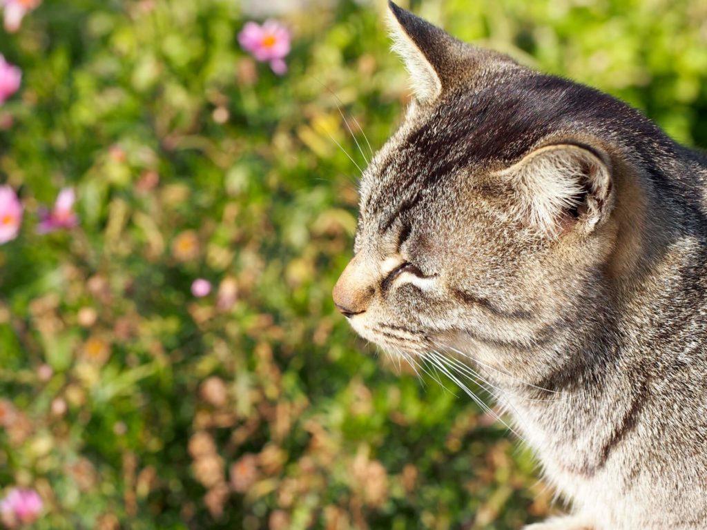 とら猫の画像